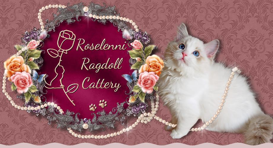 Adoption Policy and Procedure | Roselenni Ragdolls